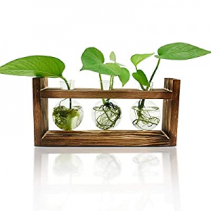50.0% off Plant Terrarium with Wooden Stand(3 Bulb Vase) Desktop Air Planter Bulb Glass Vase with ..